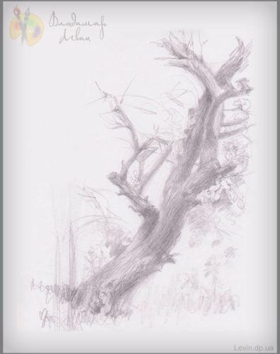 Рисунок старое дерево