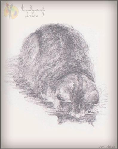 Спящая кошка, рисунок углем