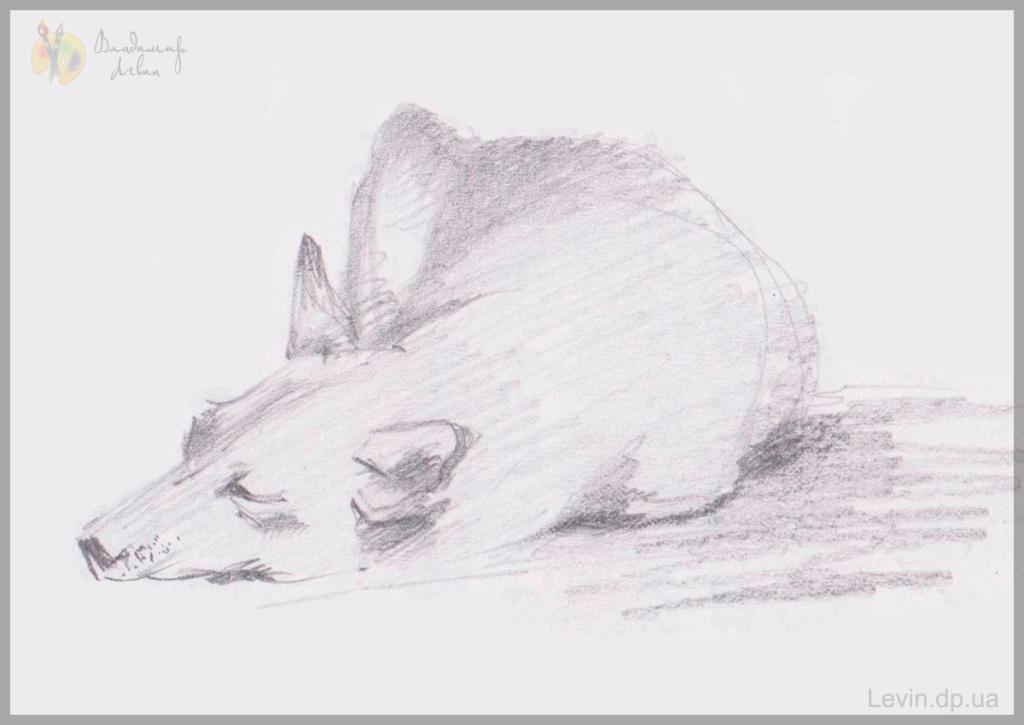Рисунок, спящая собака